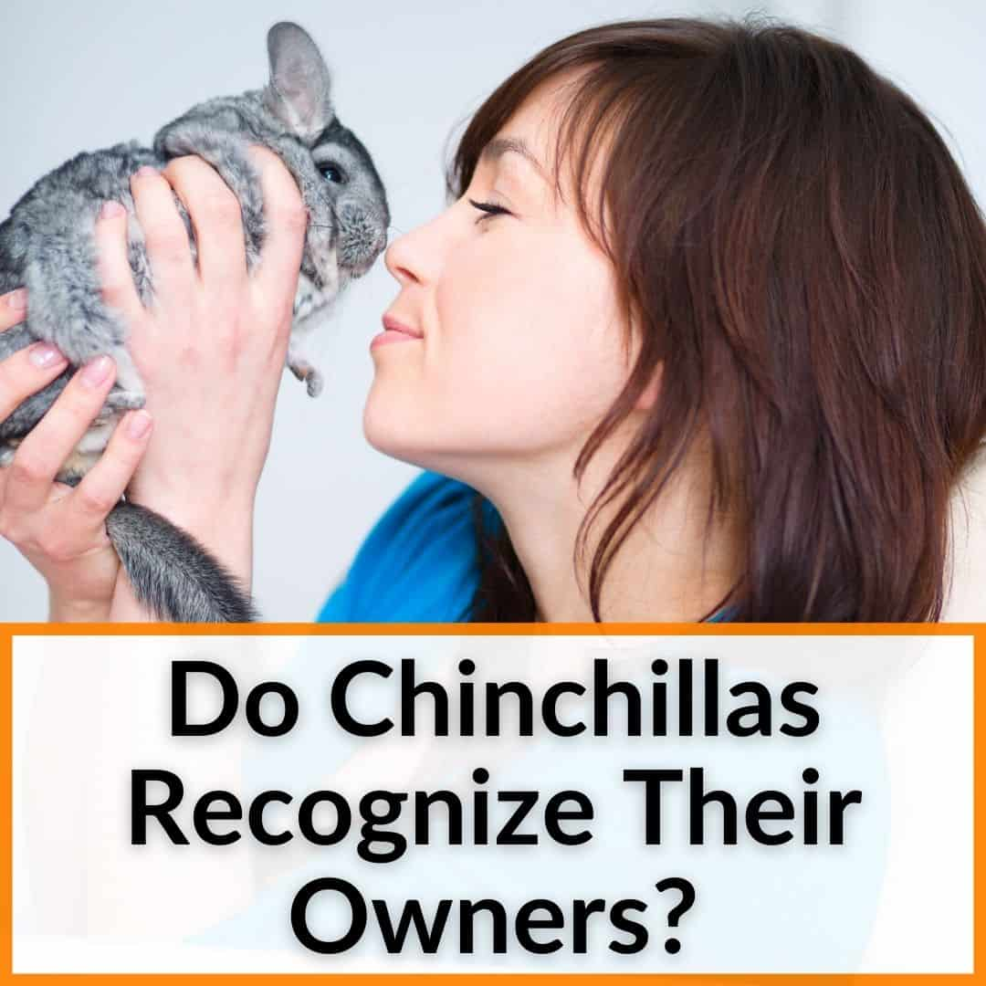 Do Chinchillas Recognize Their Owners