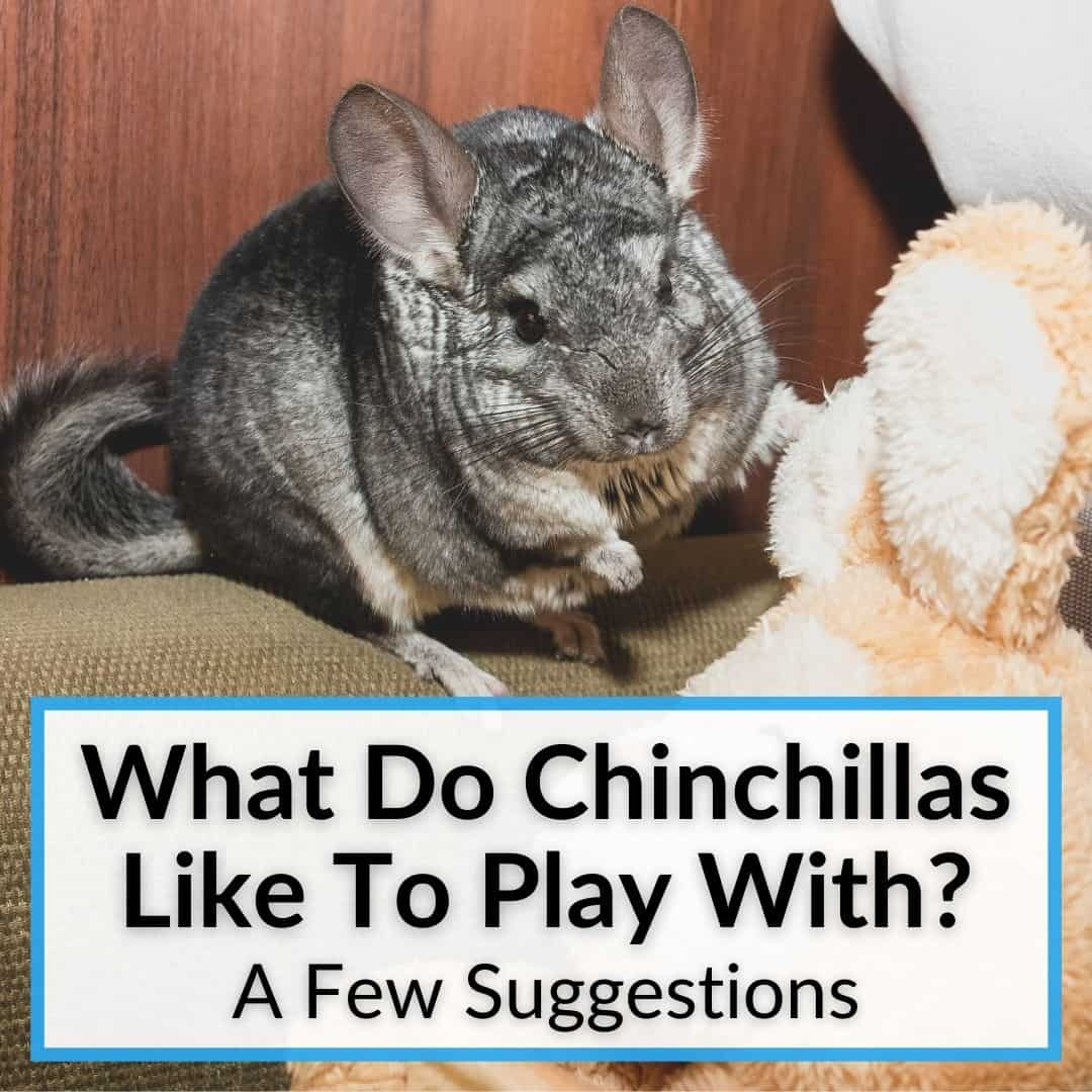 What Do Chinchillas Like To Play With