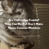 are-chinchilla-cuddly-planet-chinchilla