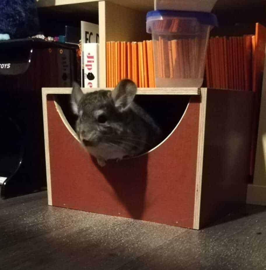 can-chinchillas-eat-cardboard-chinchilla-wooden-box