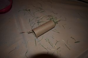should-your-chinchilla-have-cardboard-chinchilla-hay-in-toilet-paper-roll