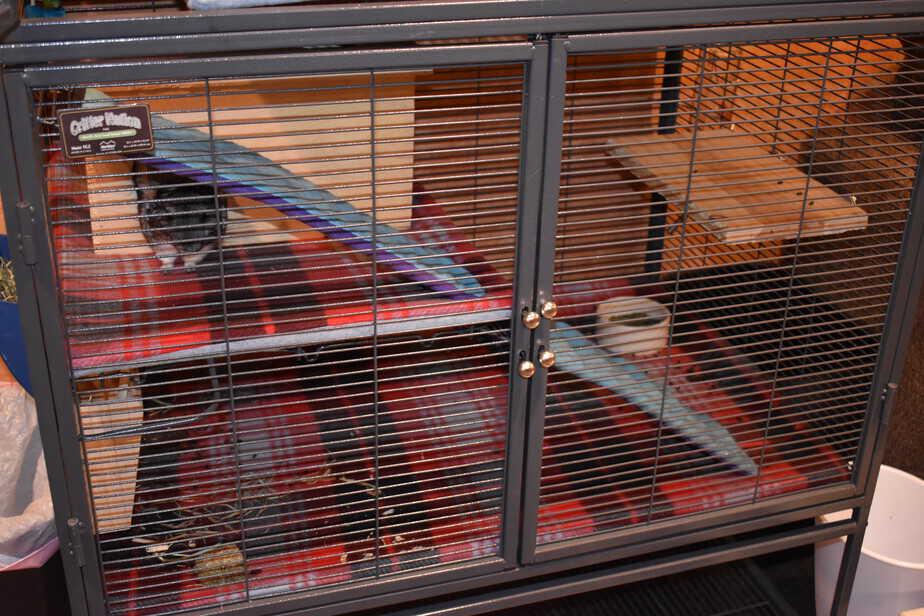 critter nation chinchilla cage
