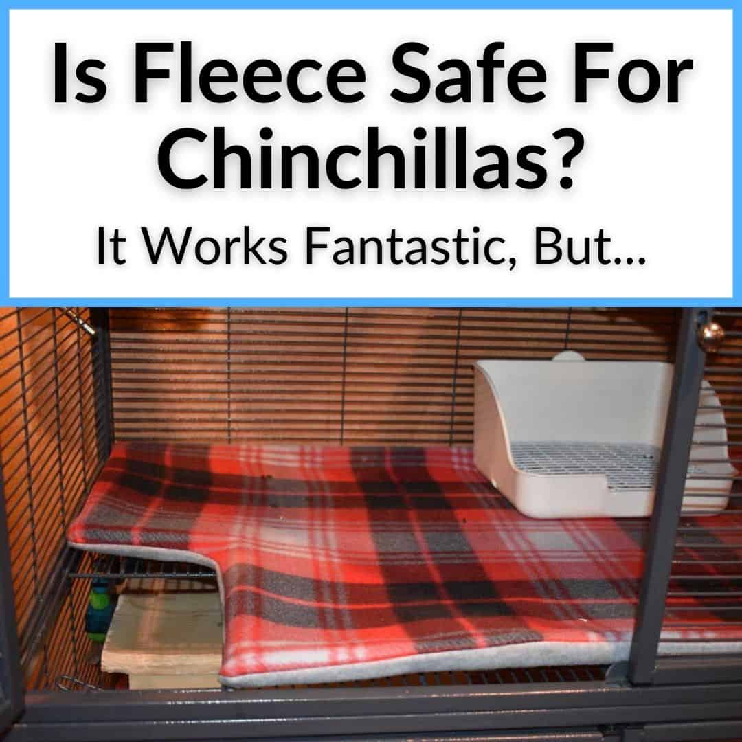 Is Fleece Safe For Chinchillas