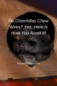 do chinchillas chew wires