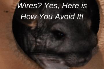 do chinchillas chew wires
