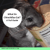 What-do-chinchillas-eat