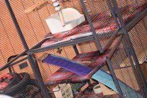 large chinchilla cage