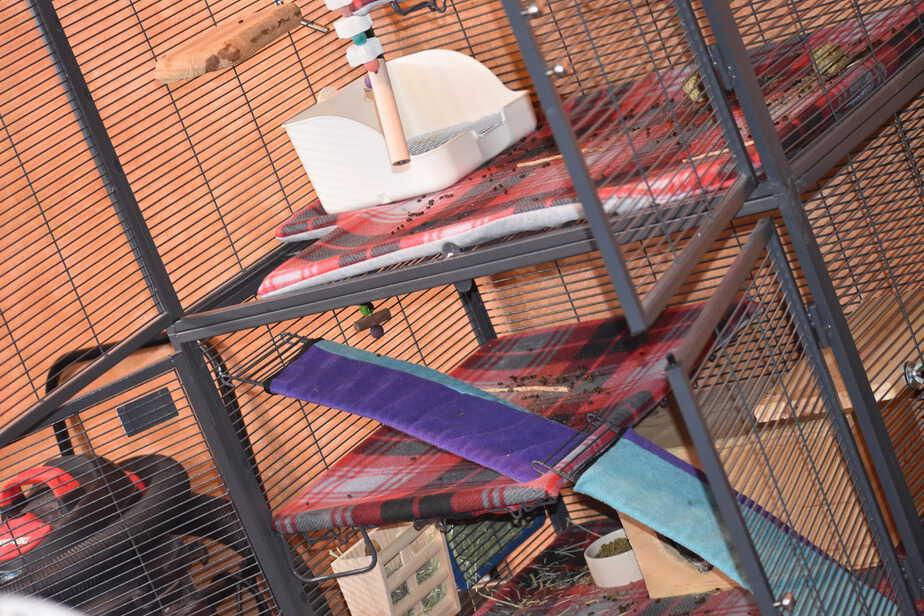 multiple level Critter Nation chinchilla cage