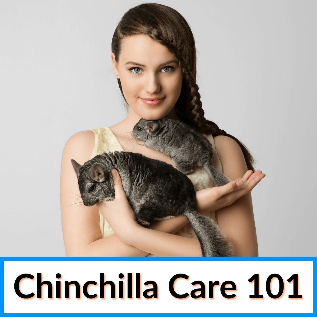 Chinchilla Care 101