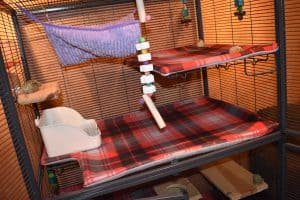 view-of-inside-critter-nation-chinchilla-cage