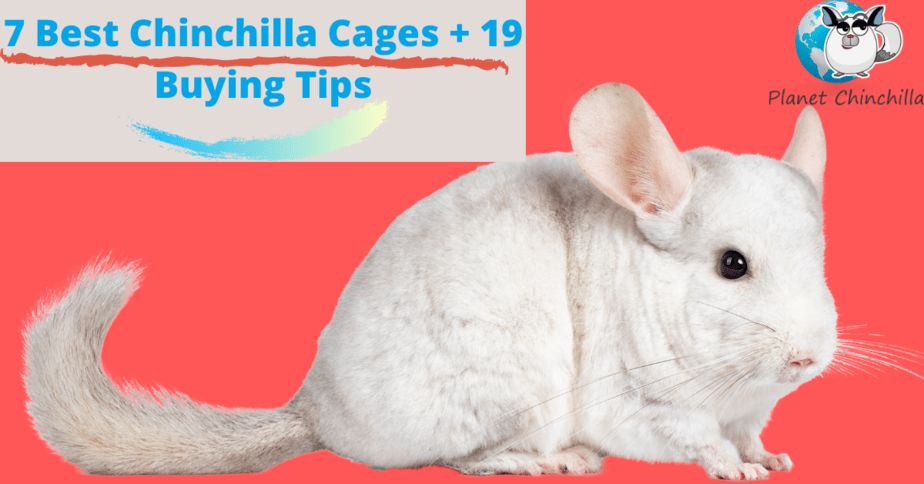 best-chinchilla-cages-reviews