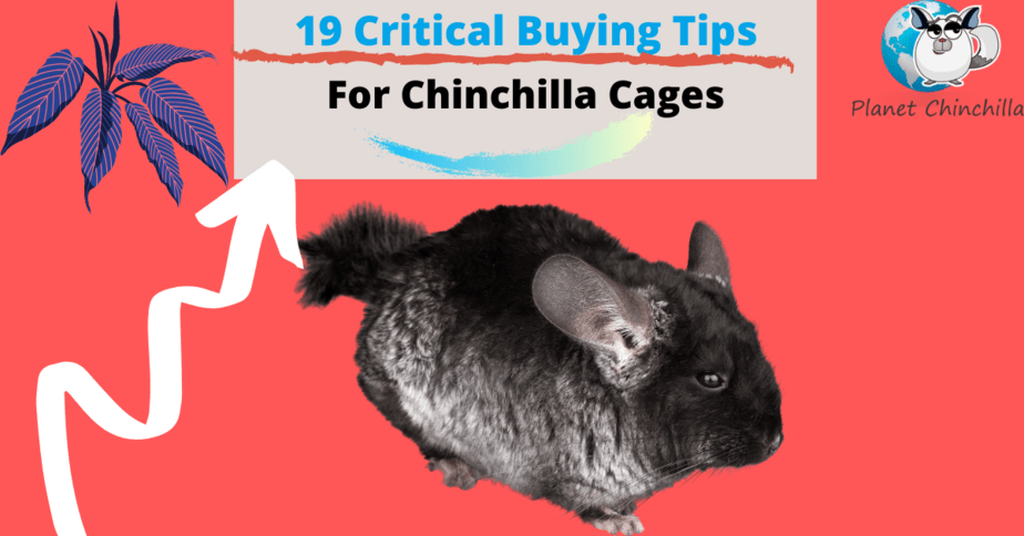 buying-the-best-chinchilla-cage-tips