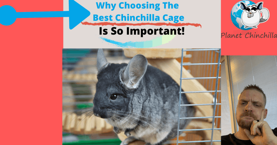 why-choosing-the-best-chinchilla-cage-is-important