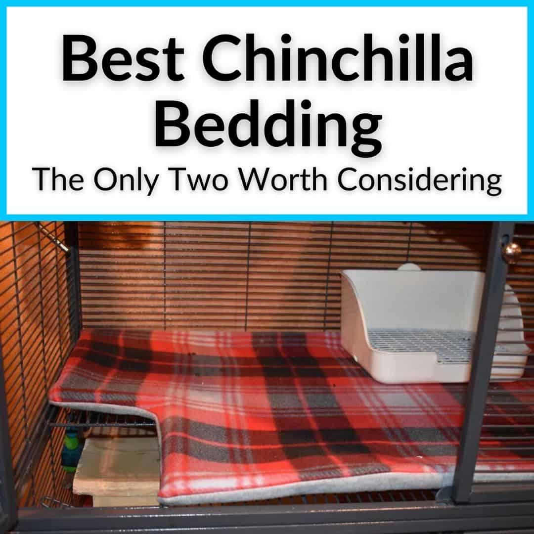 Best Chinchilla Bedding
