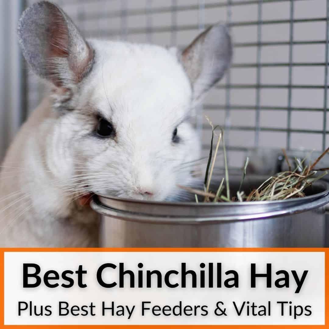 Best Chinchilla Hay