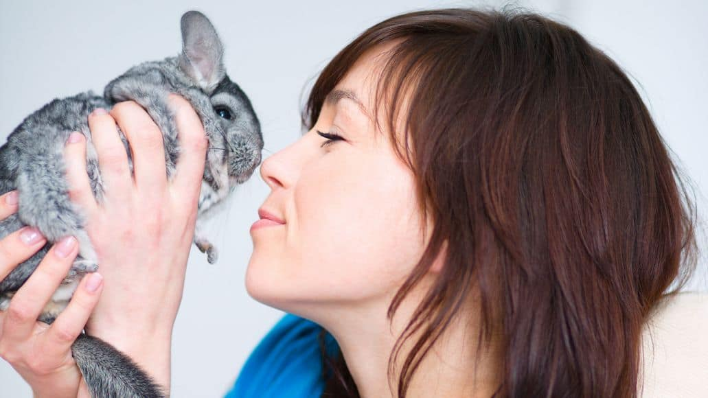 chinchilla not barking because warmed up to woman