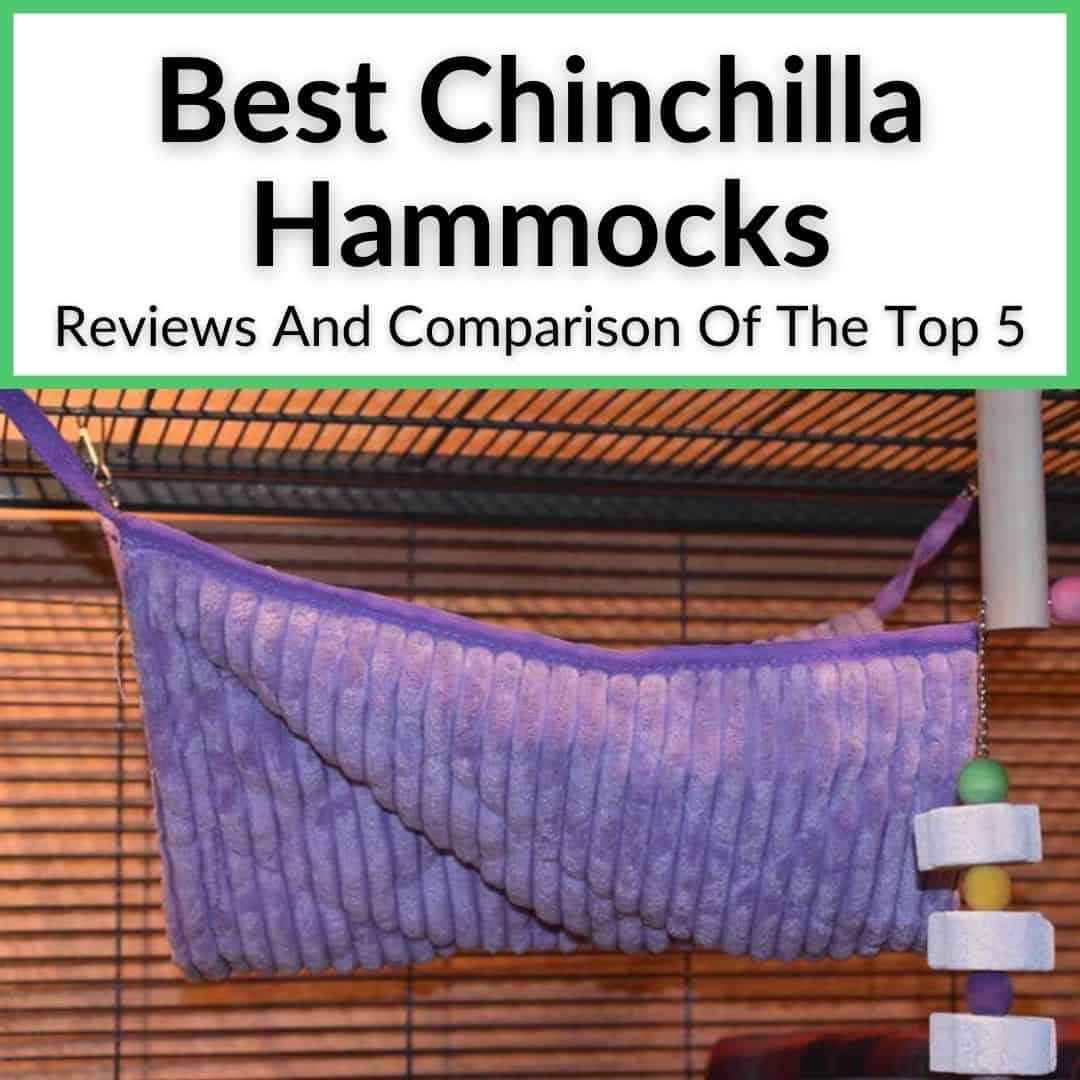Best Chinchilla Hammocks
