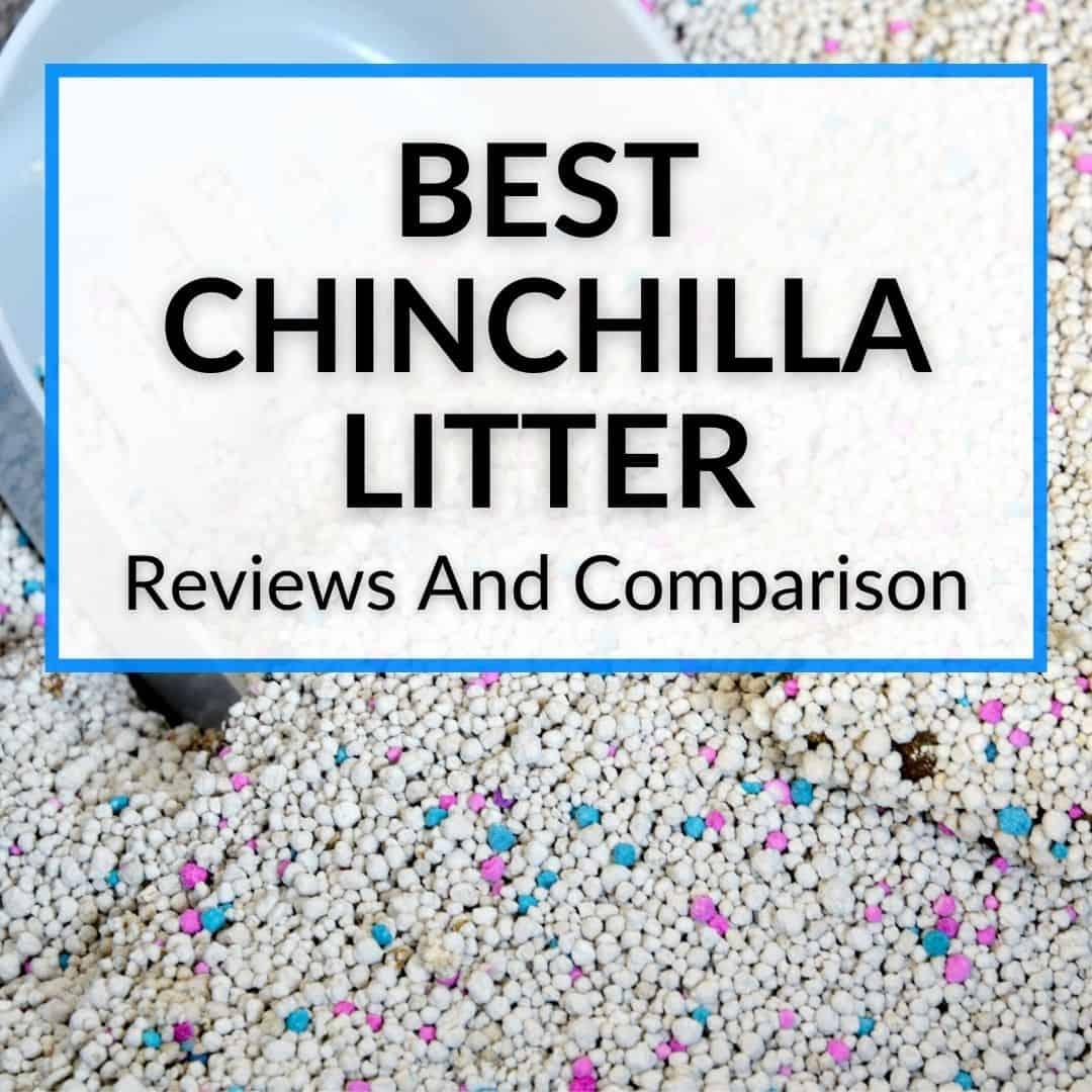 Best Chinchilla Litter