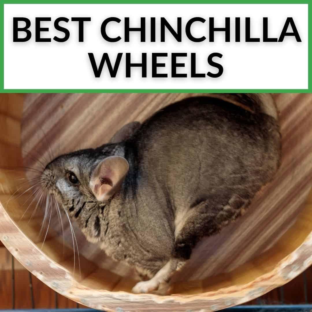Best Chinchilla Wheels