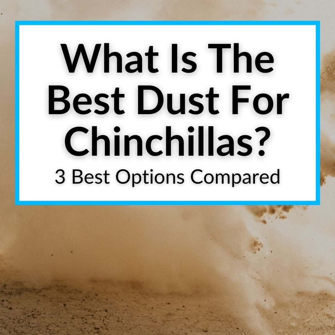 What Is The Best Dust For Chinchillas