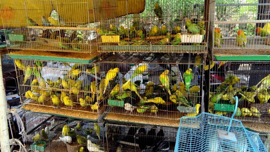 pet store cages