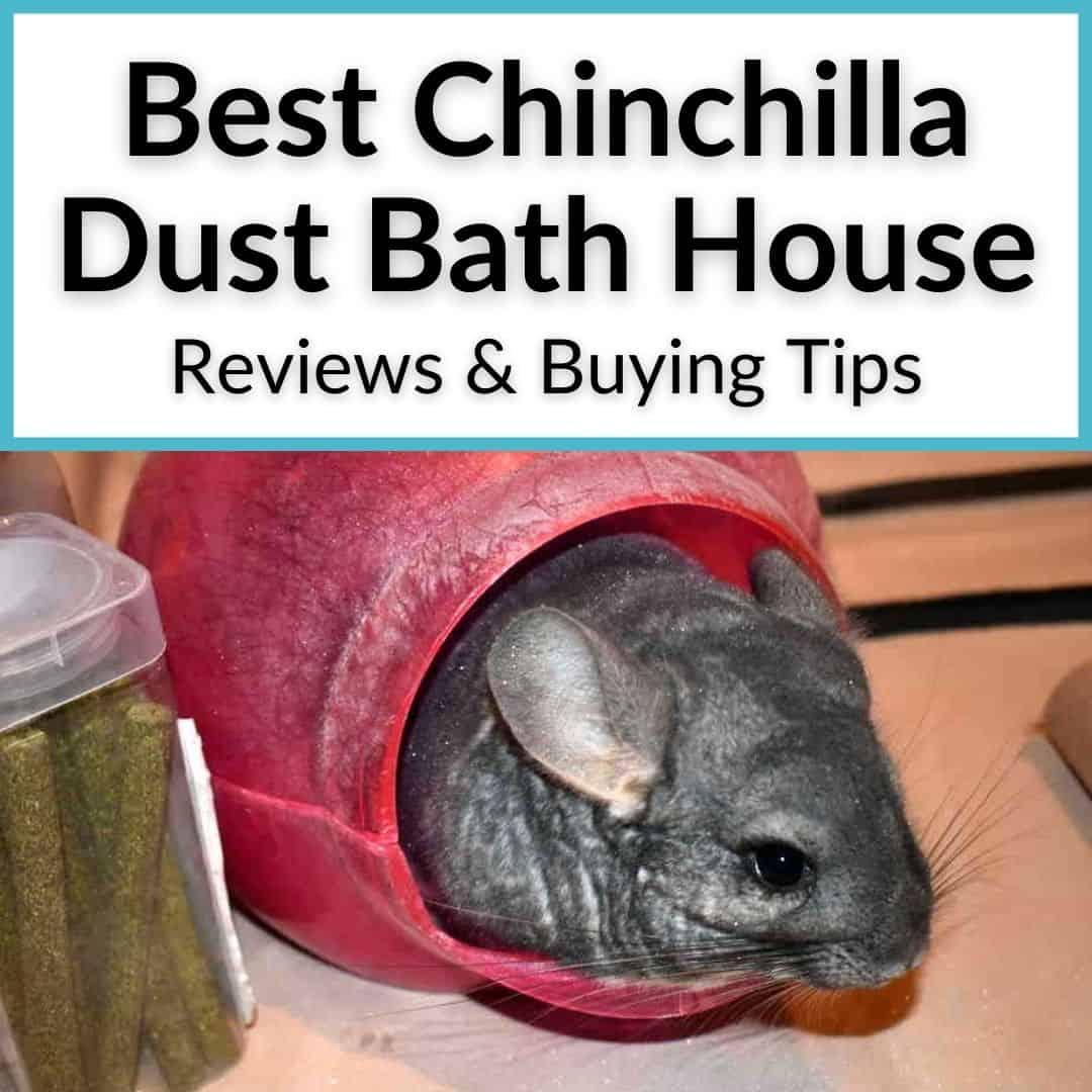 Best Chinchilla Dust Bath House