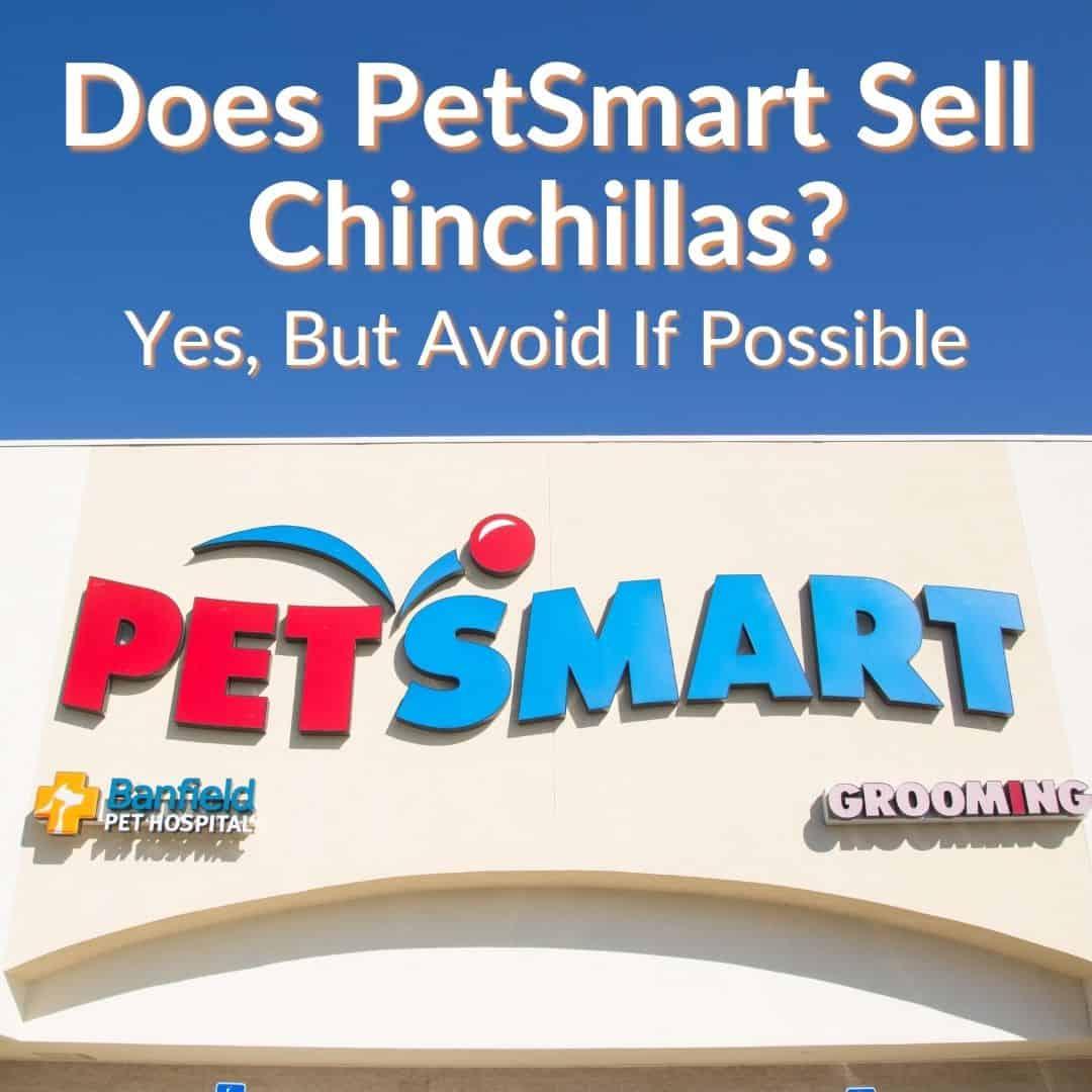Does PetSmart Sell Chinchillas