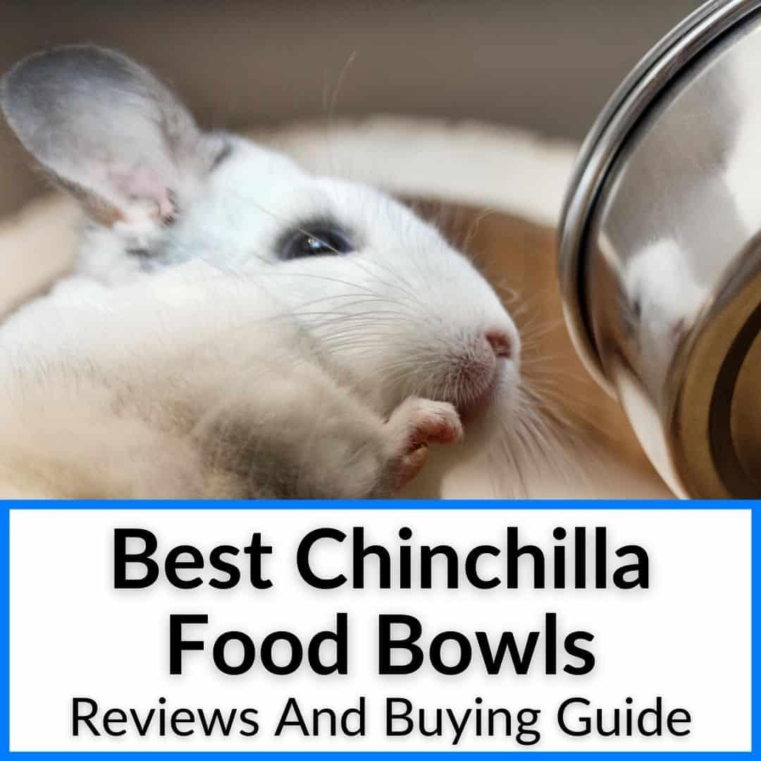 Best Chinchilla Food Bowls