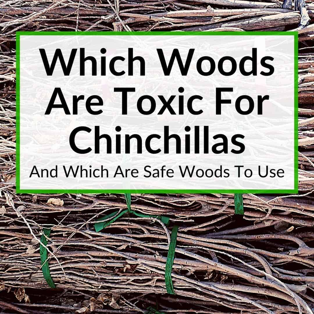 Which Woods Are Toxic For Chinchillas