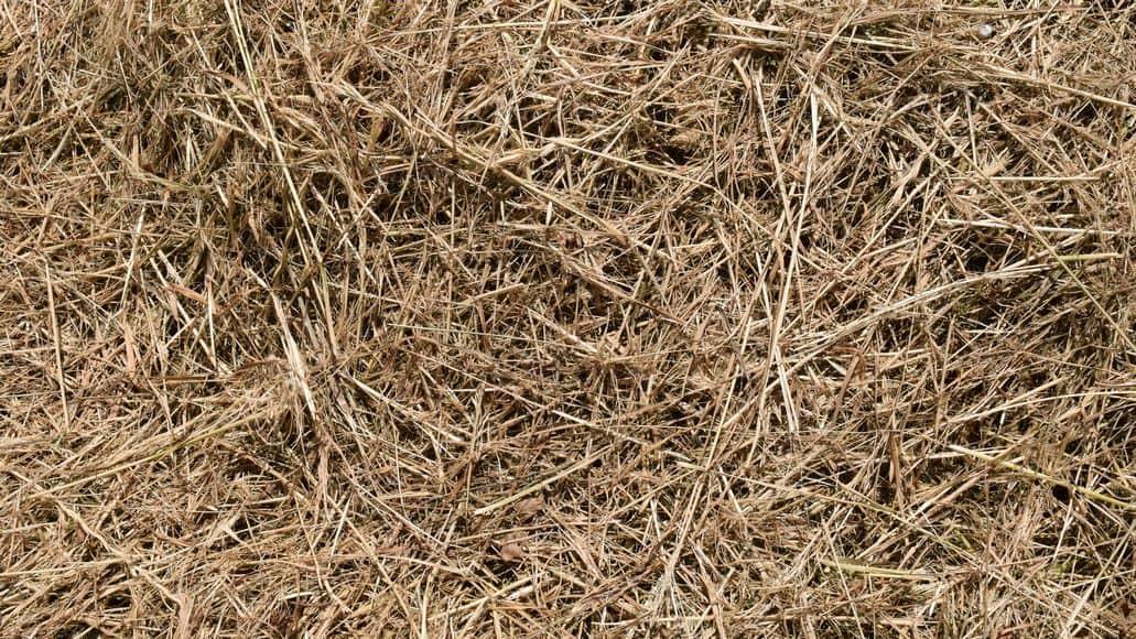 hay for chinchillas