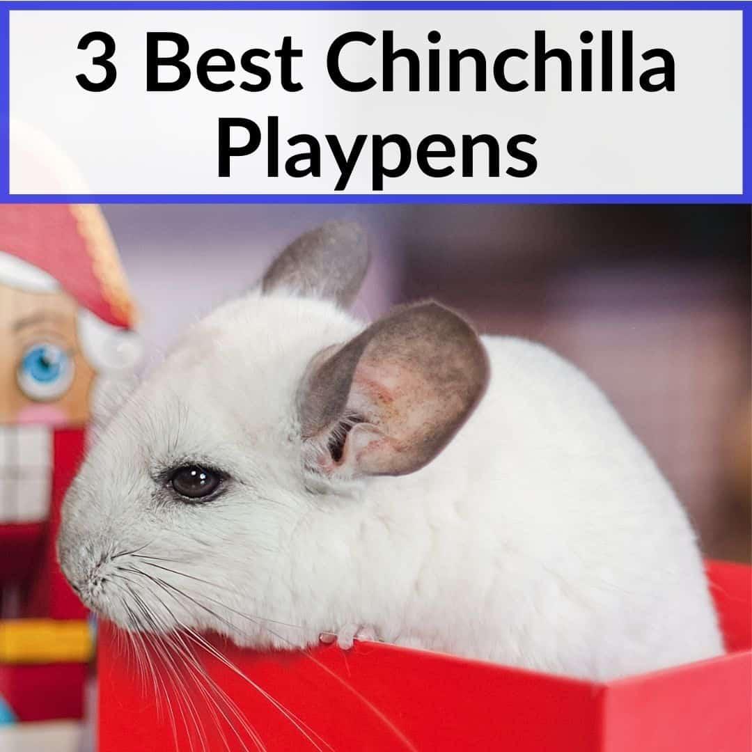 Best Chinchilla Playpens