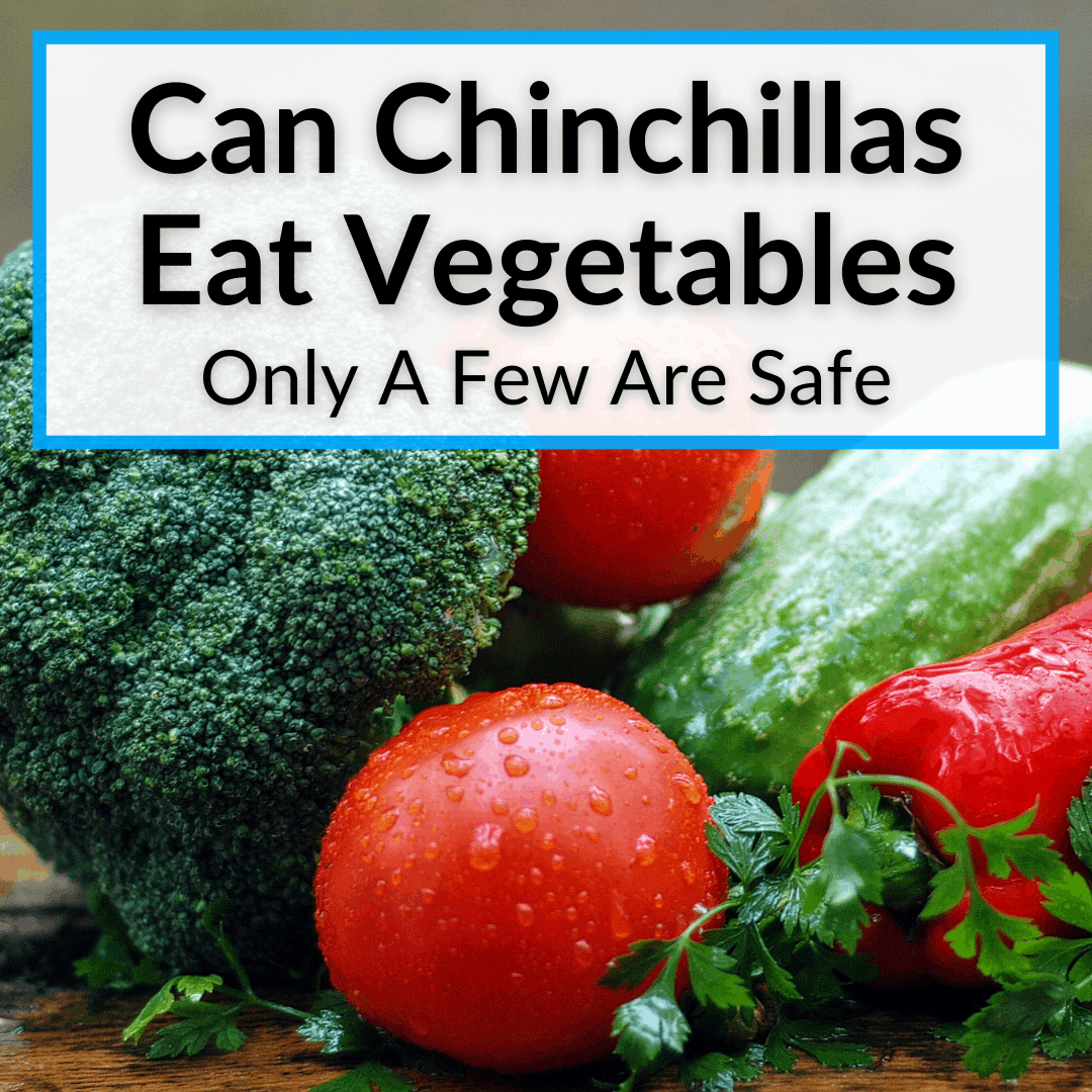 Can Chinchillas Eat Vegetables