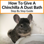How To Give A Chinchilla A Dust Bath