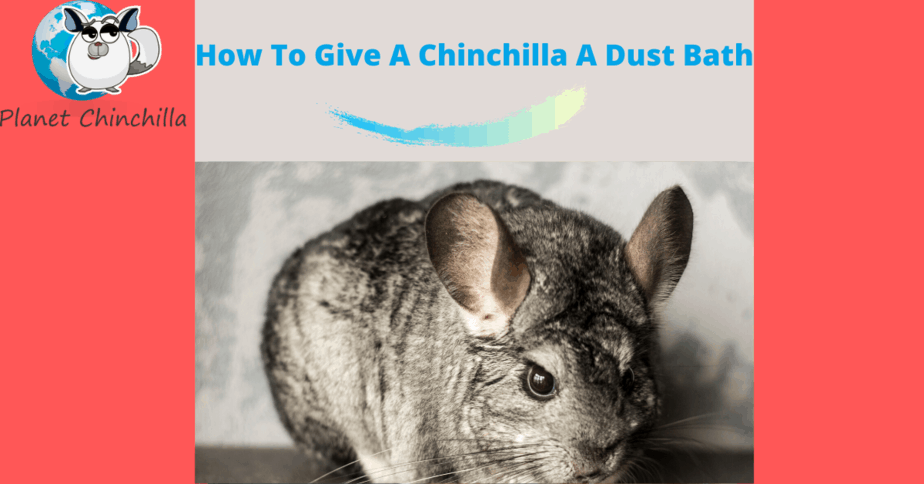 how-to-give-a-chinchilla-a-dust-bath