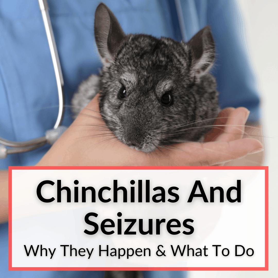 Chinchillas And Seizures